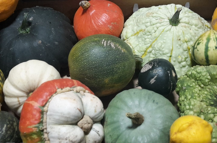Mixed Autumnal Squash